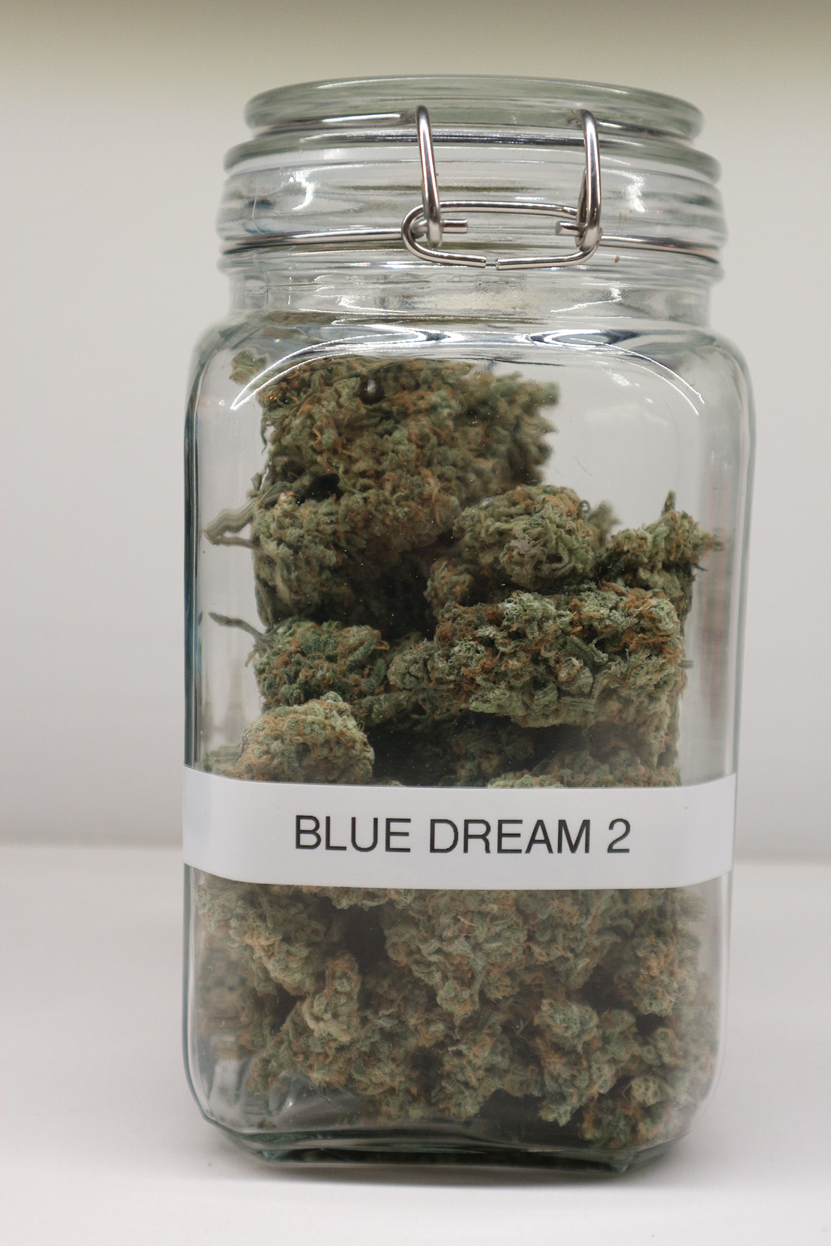 Blue Dream 2
