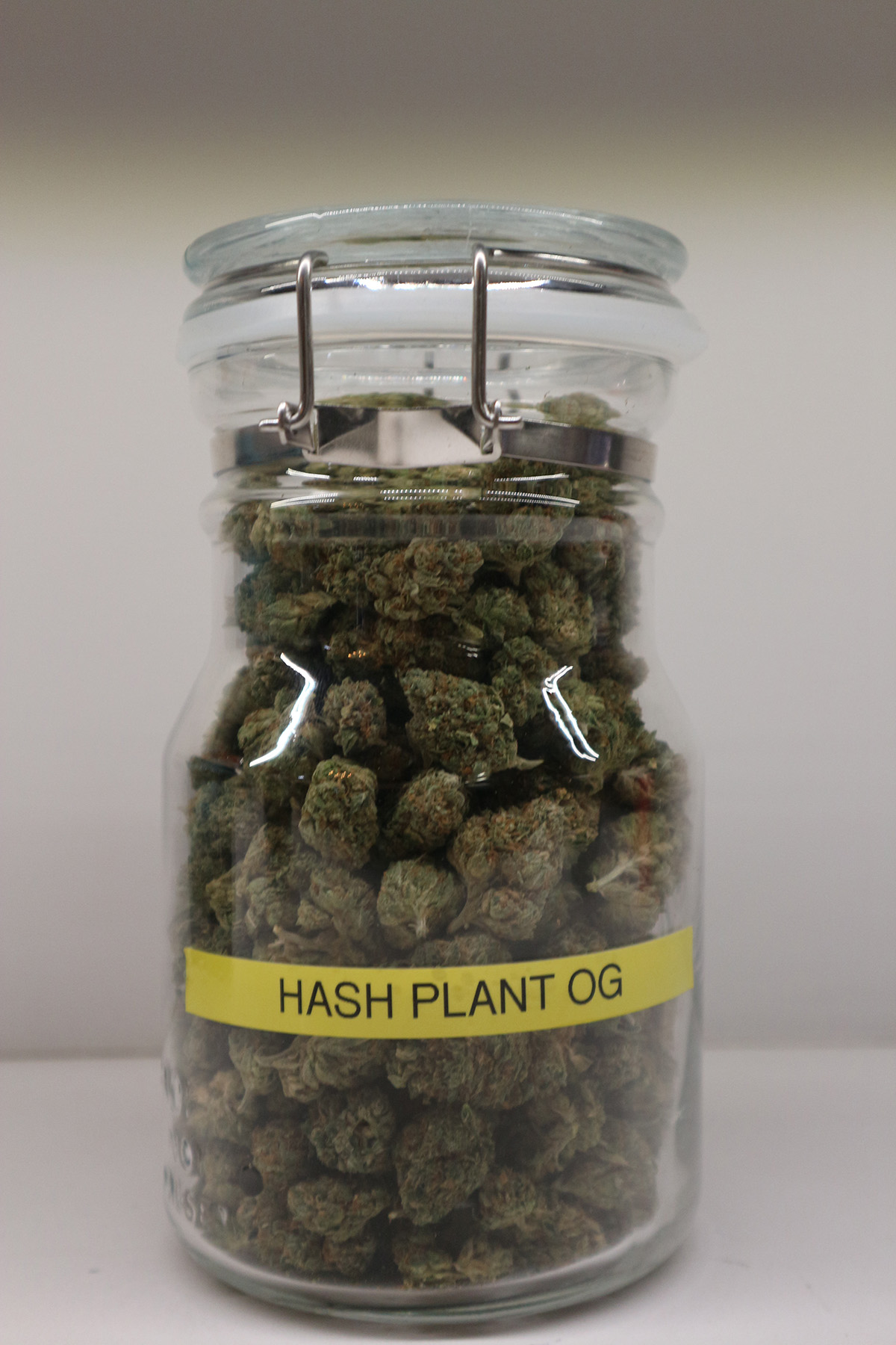 Hash Plant OG